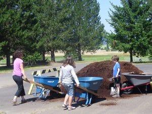 mulch-in-wheelbarrow-300x225