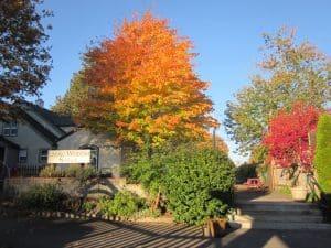 Portland School Best in Oregon, the Living Wisdom School with Holistic Education in Portland in Fall